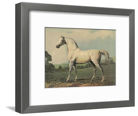 Mambrino (Racehorse)--Framed Art Print