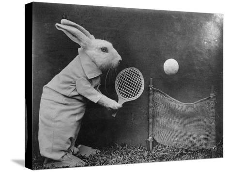 Bunny Tennis--Stretched Canvas Print