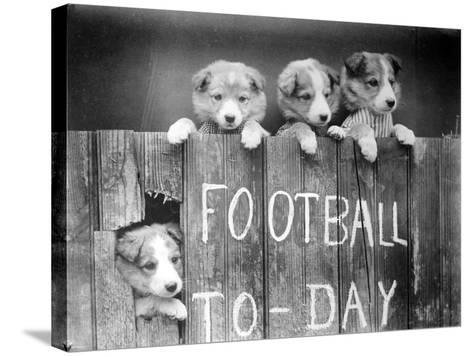 Dog Football Fans--Stretched Canvas Print