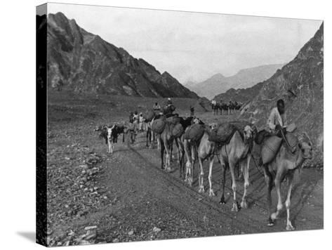 Camel Caravan--Stretched Canvas Print