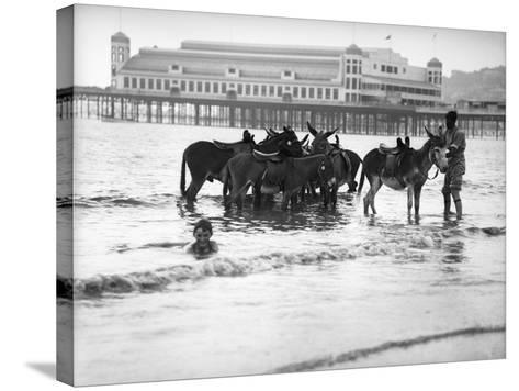 Donkeys in Sea--Stretched Canvas Print