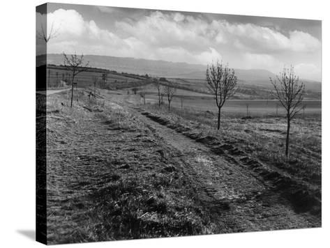 Icknield St. Roman Road--Stretched Canvas Print
