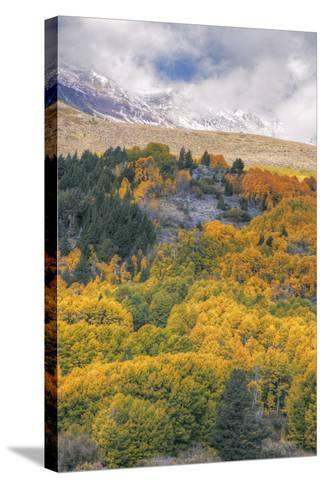Autumn Color at Rush Creek Eastern Sierras-Vincent James-Stretched Canvas Print