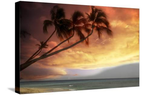 Tropical Sunset-Lyle Leduc-Stretched Canvas Print