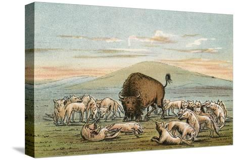 Buffalo and Coyotes-George Catlin-Stretched Canvas Print