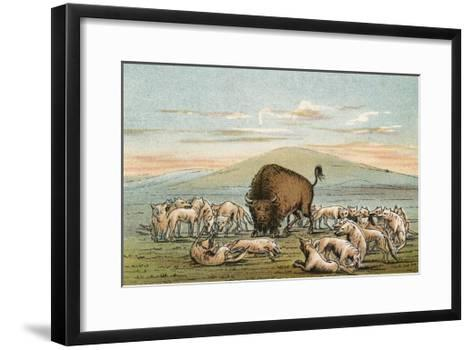 Buffalo and Coyotes-George Catlin-Framed Art Print