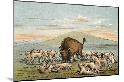 Buffalo and Coyotes-George Catlin-Mounted Giclee Print
