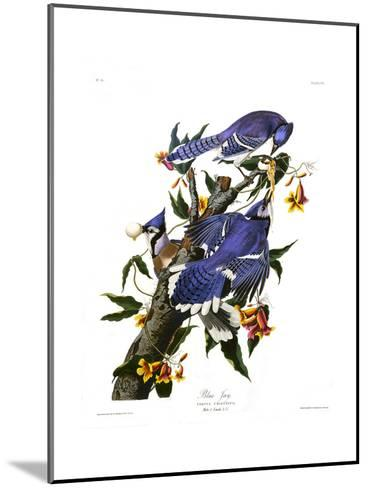 Blue Jay-John James Audubon-Mounted Giclee Print