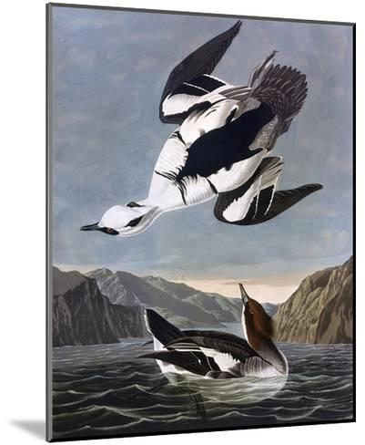 Smew, or White Nun-John James Audubon-Mounted Giclee Print