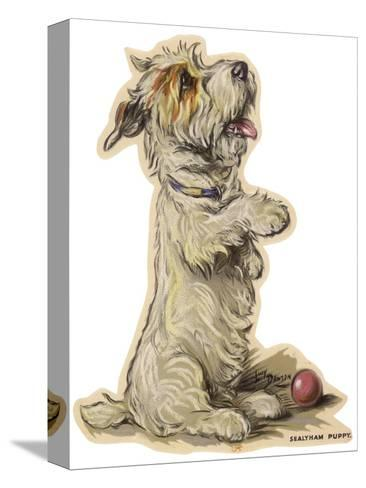 Dogs, Sealyham, Dawson-Lucy Dawson-Stretched Canvas Print