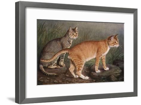 Abyssinian and Indian-W^ Luker-Framed Art Print