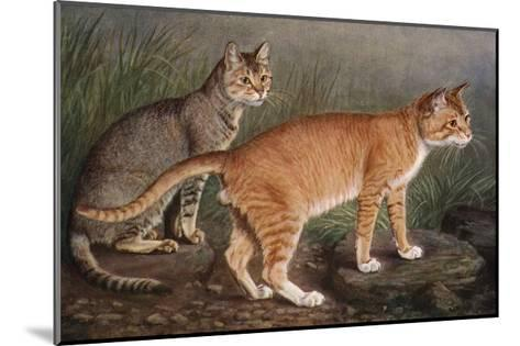 Abyssinian and Indian-W^ Luker-Mounted Giclee Print