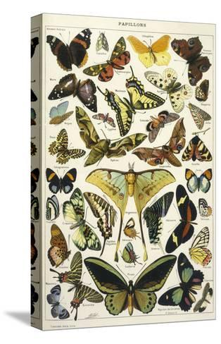 Butterflies in Larousse--Stretched Canvas Print