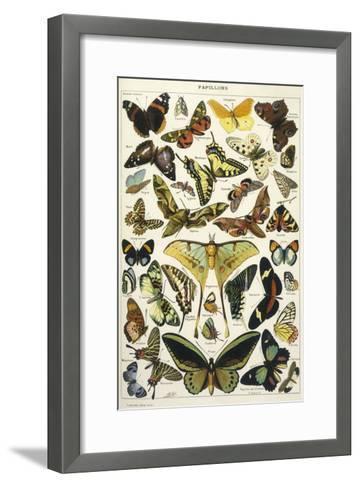 Butterflies in Larousse--Framed Art Print