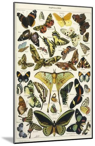 Butterflies in Larousse--Mounted Giclee Print