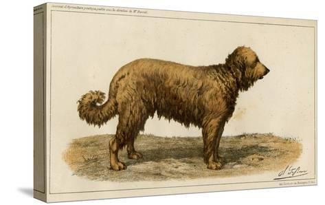 Brie Shepherd Dog at 1863 Paris Dog Show--Stretched Canvas Print