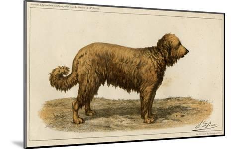 Brie Shepherd Dog at 1863 Paris Dog Show--Mounted Giclee Print