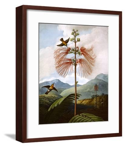 Large Flowering Sensitive Plant--Framed Art Print