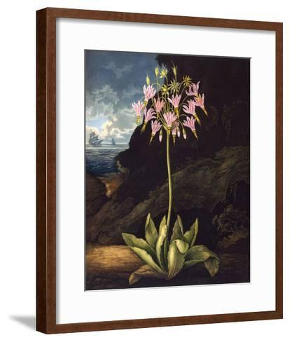The American Cowslip--Framed Art Print