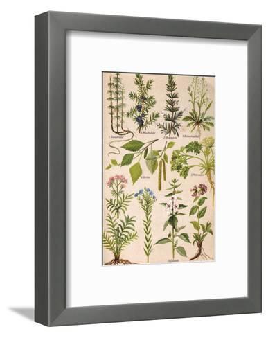 Healing Plants 1904 Pl.2-Anna Fischer-Duckelmann-Framed Art Print