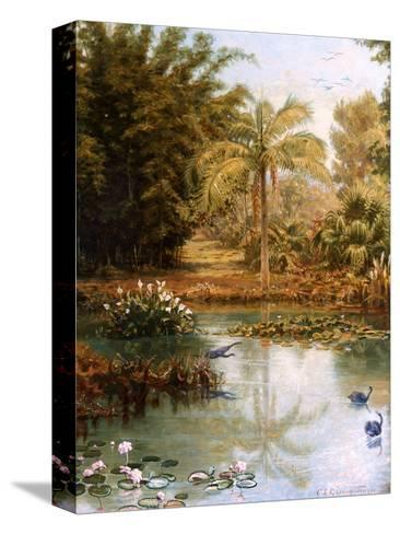 Black Swans-Charles E Gordon Frazer-Stretched Canvas Print