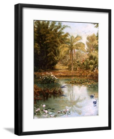 Black Swans-Charles E Gordon Frazer-Framed Art Print
