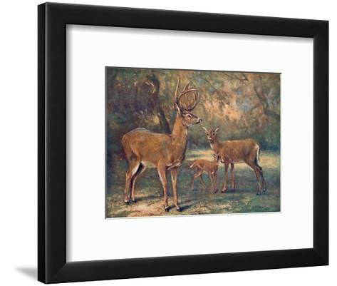 Virginian Deer, Wild Bst-Cuthbert Swan-Framed Art Print
