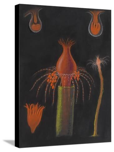 Hydrozoan-Philip Henry Gosse-Stretched Canvas Print