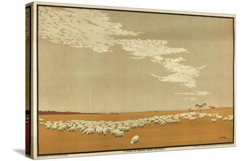 A Flock of Merino Sheep - Australia, from the Series 'Australia's Wealth of Wheat and Wool'-Archibald Bertram Webb-Stretched Canvas Print