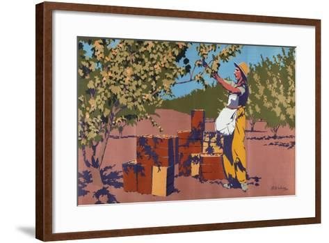 Gathering Apricots for Canning - Australia-Archibald Bertram Webb-Framed Art Print