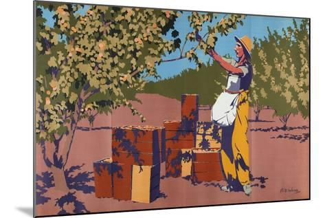 Gathering Apricots for Canning - Australia-Archibald Bertram Webb-Mounted Giclee Print