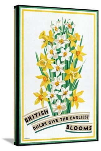 British Bulbs Give the Earliest Blooms, from the Series 'British Bulbs for Home Gardens'- Fawkes-Stretched Canvas Print