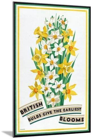 British Bulbs Give the Earliest Blooms, from the Series 'British Bulbs for Home Gardens'- Fawkes-Mounted Giclee Print