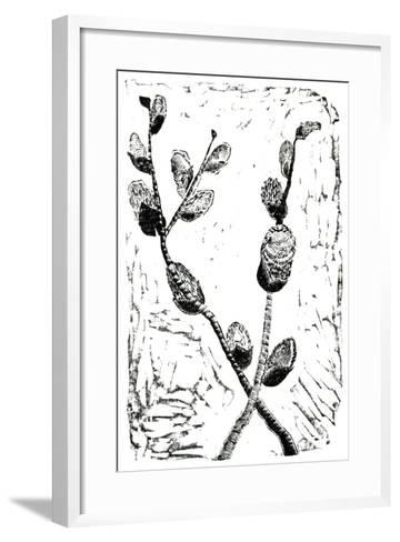 Sleeping Pussy Willow, 2014-Bella Larsson-Framed Art Print
