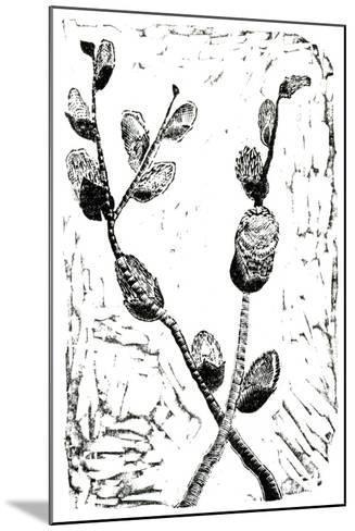 Sleeping Pussy Willow, 2014-Bella Larsson-Mounted Giclee Print