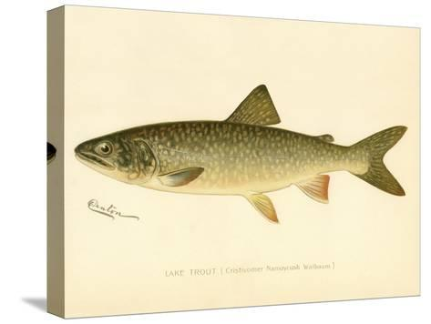 Lake Trout--Stretched Canvas Print