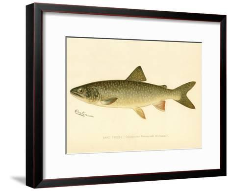 Lake Trout--Framed Art Print