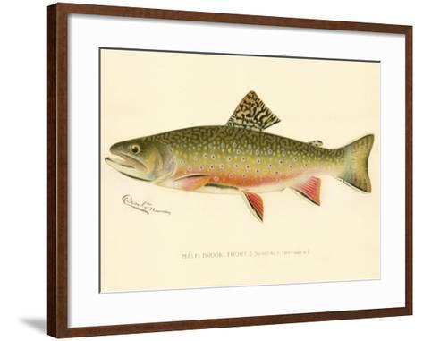 Male Brook Trout--Framed Art Print