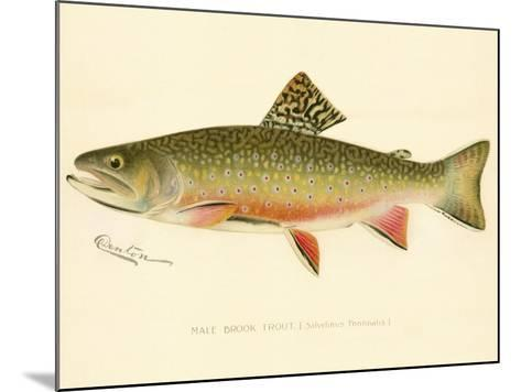 Male Brook Trout--Mounted Giclee Print