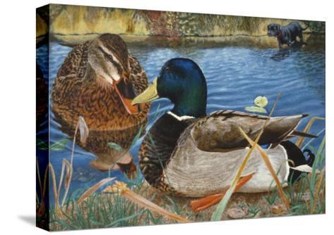 Mallards-Rusty Frentner-Stretched Canvas Print