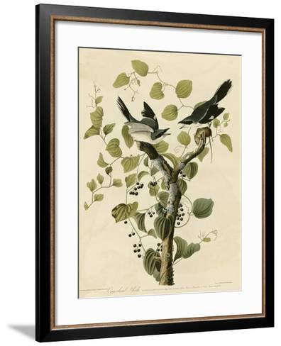Loggerhead Shrike--Framed Art Print