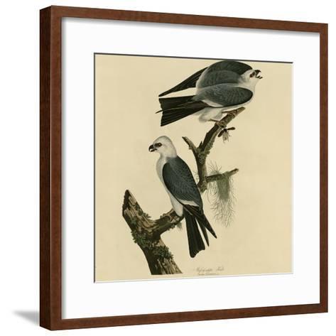 Mississippi Kite--Framed Art Print