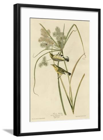 Prairie Warbler--Framed Art Print