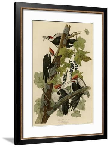 Pileated Woodpecker--Framed Art Print