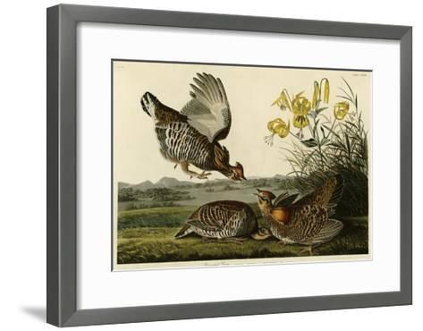 Pinnated Grouse--Framed Art Print