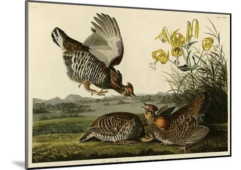 Pinnated Grouse--Mounted Giclee Print