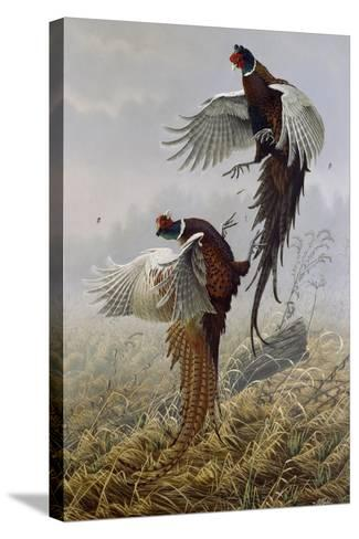 Ringneck Rivalry-Wilhelm Goebel-Stretched Canvas Print