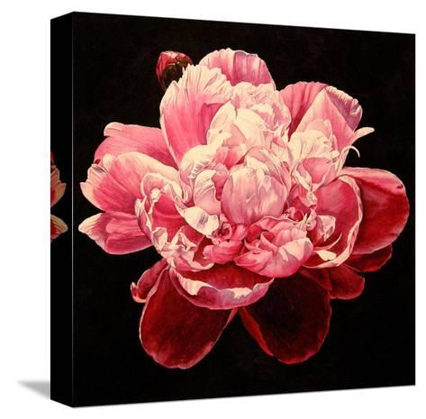 Peony - Explosion-Laurin McCracken-Stretched Canvas Print