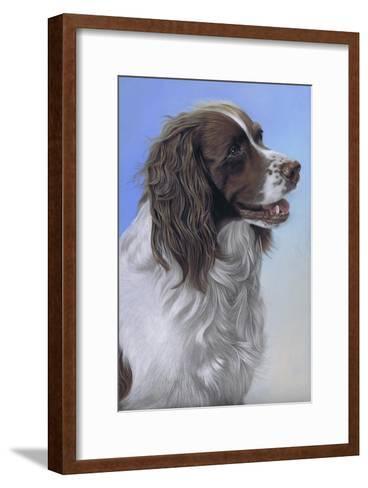 Springer Spaniel Brodie-Karie-Ann Cooper-Framed Art Print