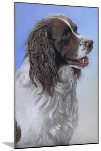 Springer Spaniel Brodie-Karie-Ann Cooper-Mounted Giclee Print